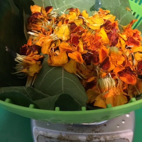 Preparations for dyeing with marigold and fig leaf