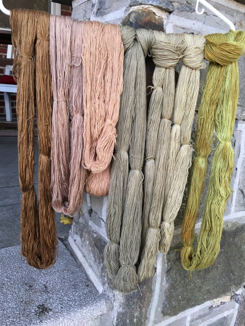The two skeins on the left are walnut hull dye