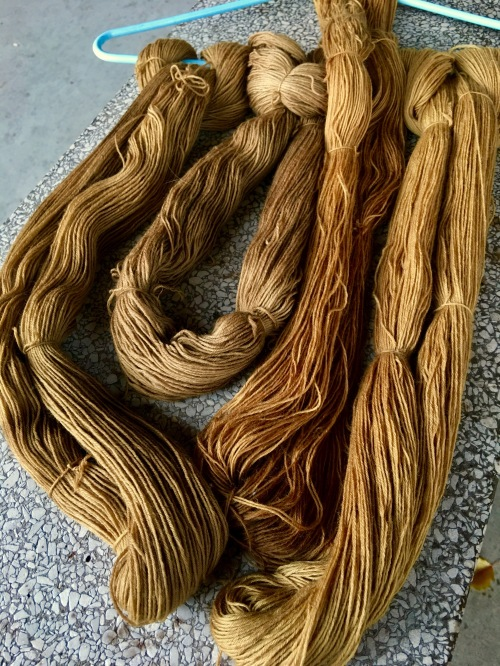 Walnut hull and brown maple leaf dyes