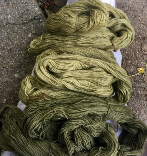 Green yarn dyed in various plant dyes and modifiers
