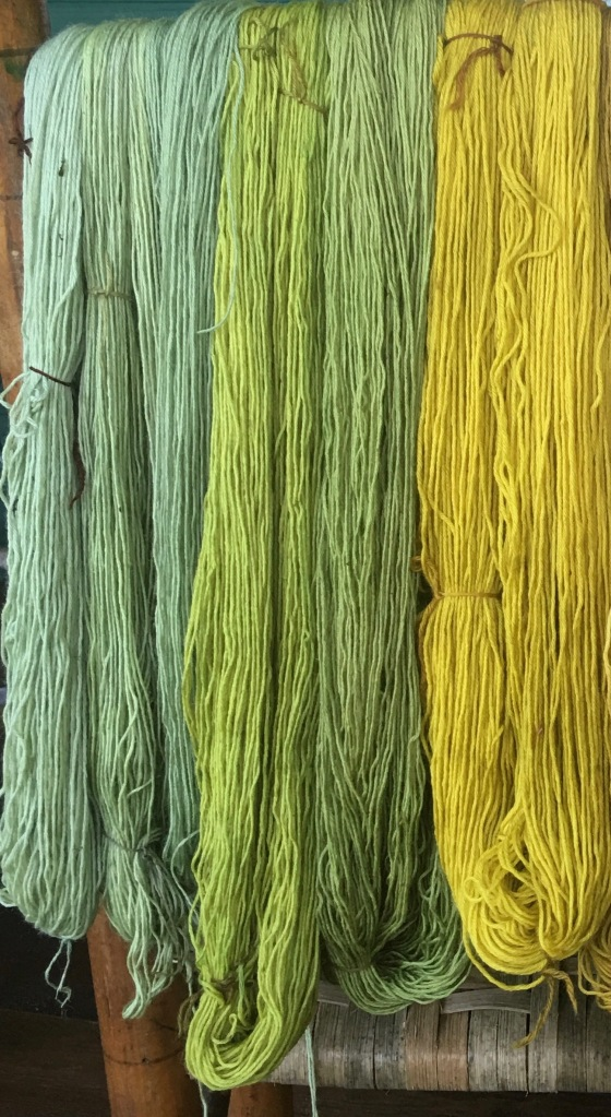 Range of colors dyed in tansy