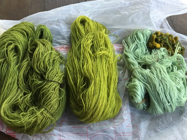 natural dyeing with tansy