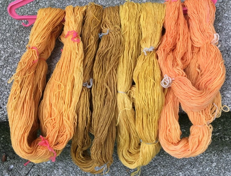 Annatto seed dyed yarn after rinsing and drying