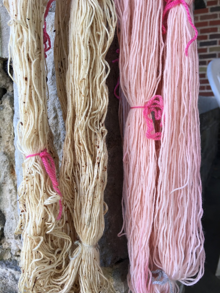 Yarn dyed in fermented gingko fruit and penstemon
