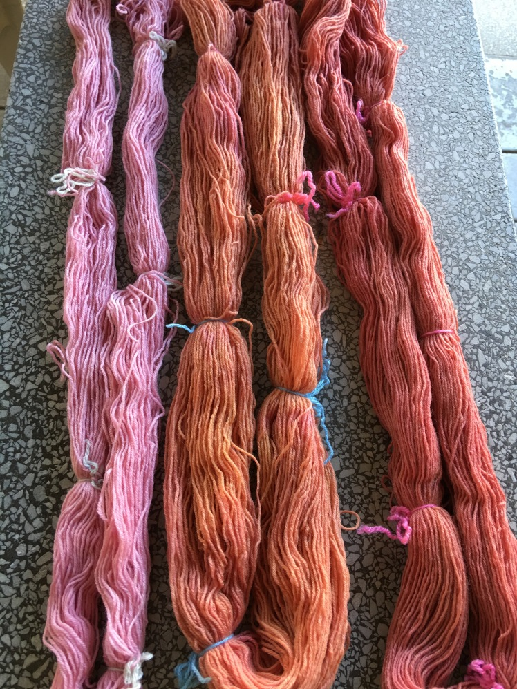 Amaranth dyeing from plants at the end of the growing season