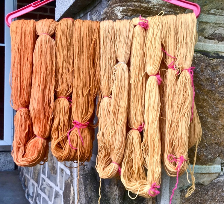 Yarn dyed in fermented yellow cosmos dye